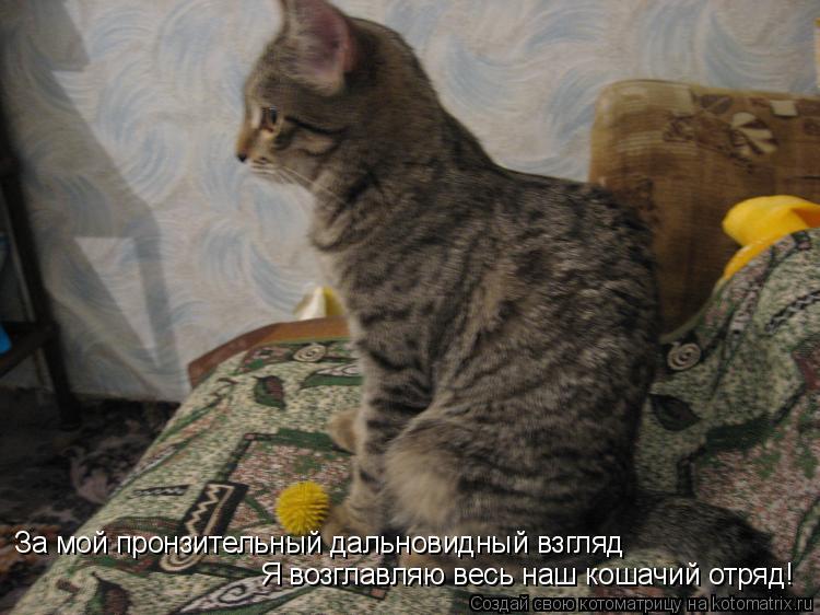 Котоматрица: За мой пронзительный дальновидный взгляд  Я возглавляю весь наш кошачий отряд!