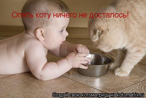 Котоматрица: Опять коту ничего не досталось!