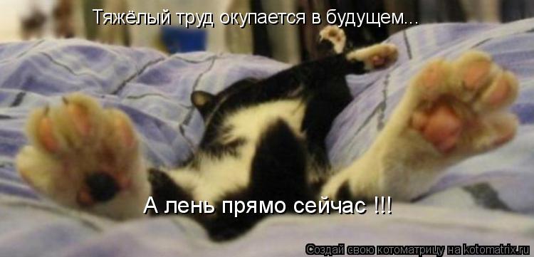 Котоматрица: Тяжёлый труд окупается в будущем... А лень прямо сейчас !!!