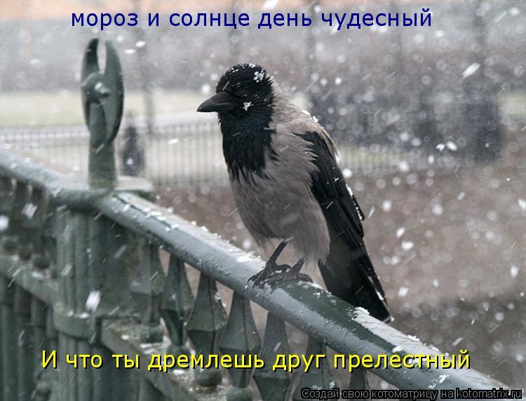Котоматрица: мороз и солнце день чудесный И что ты дремлешь друг прелестный