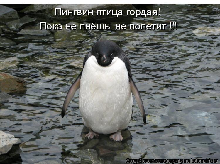 Котоматрица: Пингвин птица гордая! Пока не пнёшь, не полетит !!!
