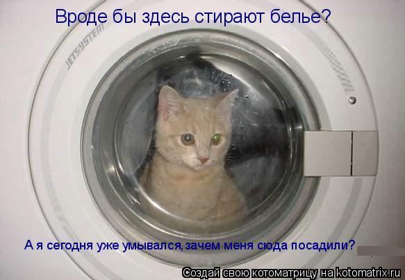 Котоматрица: Вроде бы здесь стирают белье? А я сегодня уже умывался,зачем меня сюда посадили?
