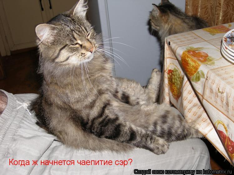 Котоматрица: Когда ж начнется чаепитие сэр?