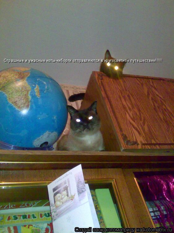 Котоматрица: Страшные и ужасные коты-киборги отправляются в кругосветное путешествие!!!!!