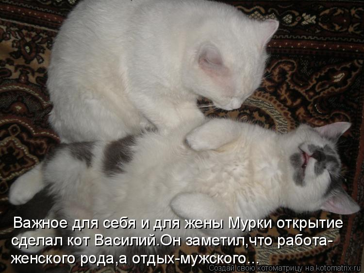 Котоматрица: Важное для себя и для жены Мурки открытие  сделал кот Василий.Он заметил,что работа-  женского рода,а отдых-мужского...