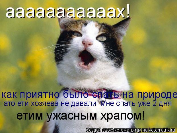 Котоматрица: ааааааааааах! как приятно было спать на природе ато ети хозяева не давали  мне спать уже 2 дня  етим ужасным храпом!