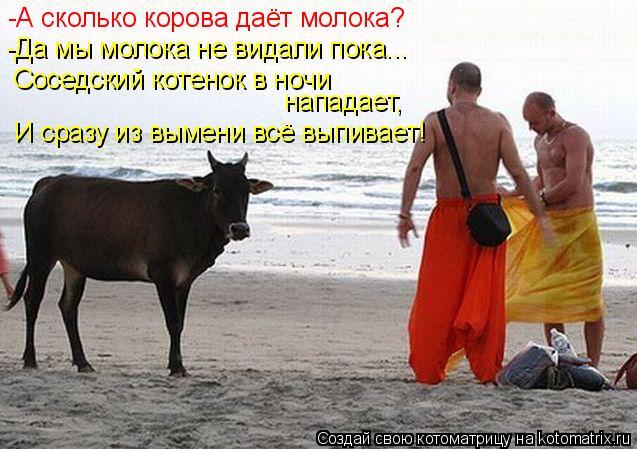 Котоматрица: -А сколько корова даёт молока? -Да мы молока не видали пока... Соседский котенок в ночи нападает, И сразу из вымени всё выпивает!