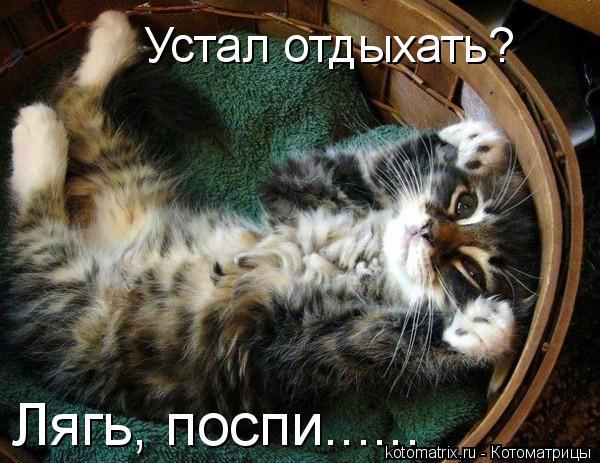 Котоматрица: Устал отдыхать? Лягь, поспи......