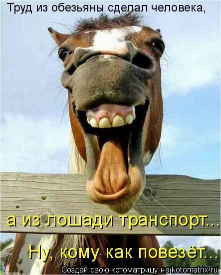 Котоматрица: Ну, кому как повезёт...        а из лошади транспорт... Труд из обезьяны сделал человека,