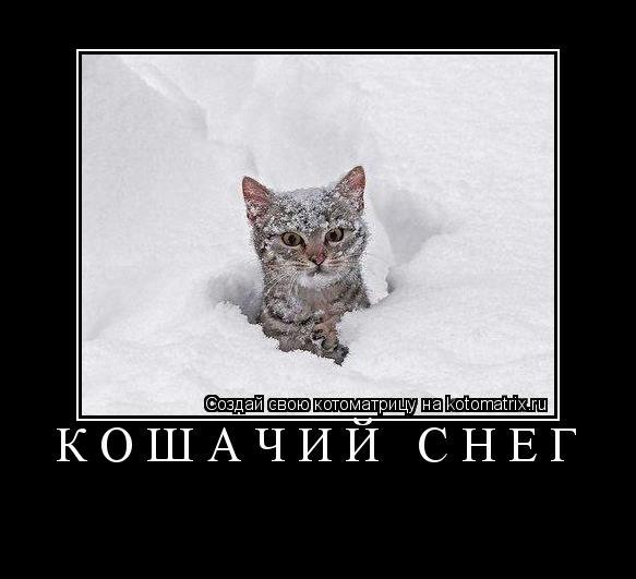 Котоматрица: Кошачий снег