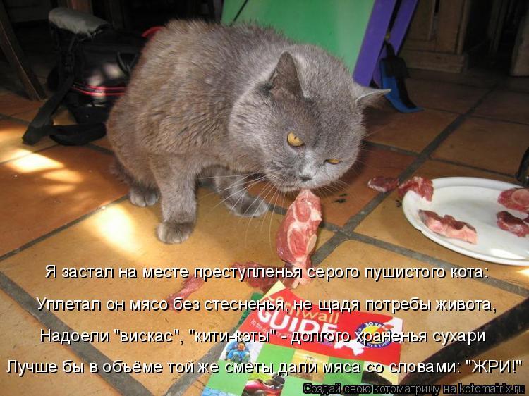 Котоматрица: Я застал на месте преступленья серого пушистого кота: Уплетал он мясо без стесненья, не щадя потребы живота, Лучше бы в объёме той же сметы д