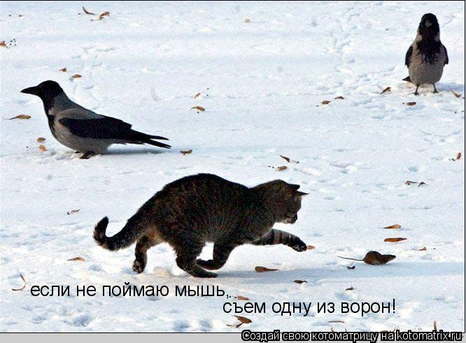 Котоматрица: если не поймаю мышь, съем одну из ворон!