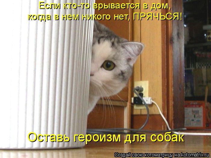 Котоматрица: Если кто-то врывается в дом,  когда в нем никого нет, ПРЯЧЬСЯ!  Оставь героизм для собак