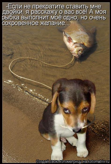 Котоматрица: -Если не прекратите ставить мне двойки, я расскажу о вас всё! А моя рыбка выполнит моё одно, но очень сокровенное желание...