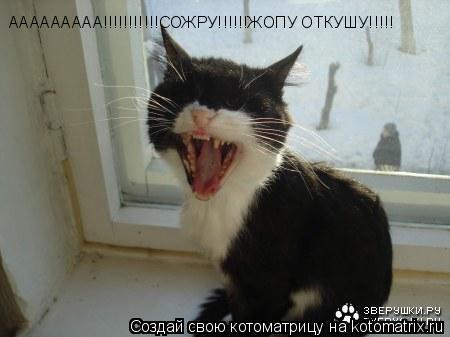 Котоматрица: ААААААААА!!!!!!!!!!!СОЖРУ!!!!!!ЖОПУ ОТКУШУ!!!!!