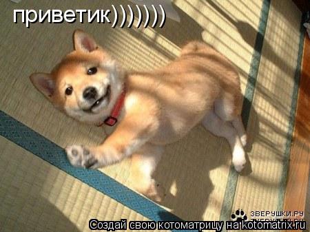 Котоматрица: приветик)))))))