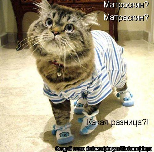 Котоматрица: Матроскин? Матраскин? Какая разница?!