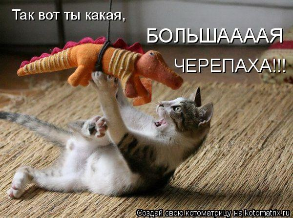 Котоматрица: Так вот ты какая, БОЛЬШААААЯ ЧЕРЕПАХА!!!