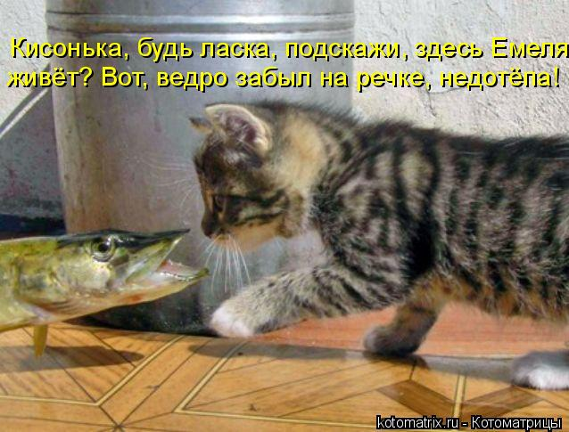 Котоматрица: Кисонька, будь ласка, подскажи, здесь Емеля живёт? Вот, ведро забыл на речке, недотёпа!