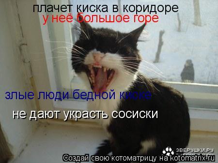 Котоматрица: плачет киска в коридоре у неё большое горе злые люди бедной киске не дают украсть сосиски
