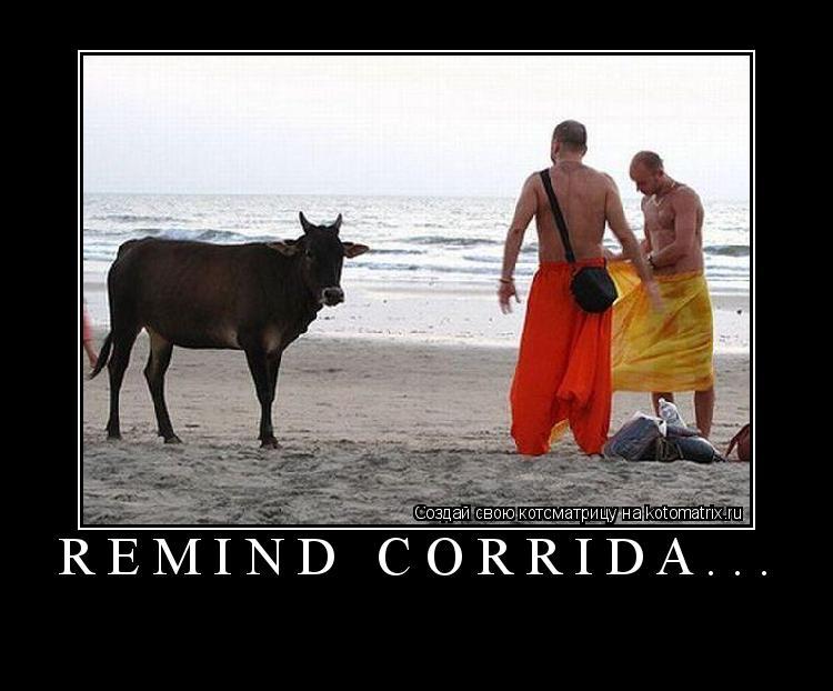 Котоматрица: remind corrida...