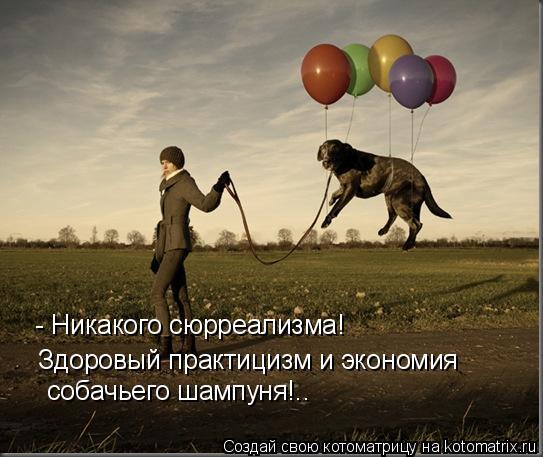Котоматрица: - Никакого сюрреализма! Здоровый практицизм и экономия  собачьего шампуня!..