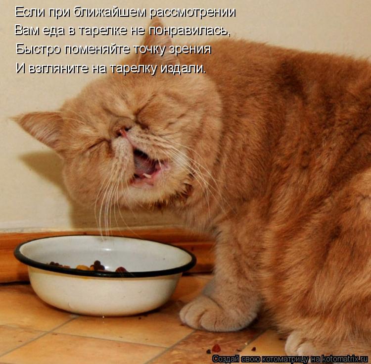 Котоматрица: Если при ближайшем рассмотрении Вам еда в тарелке не понравилась, Быстро поменяйте точку зрения И взгляните на тарелку издали.