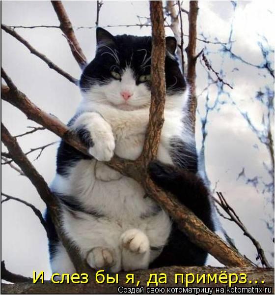 Котоматрица: И слез бы я, да примёрз...
