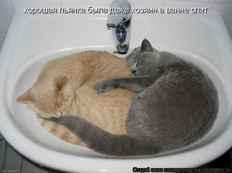 Котоматрица: хорошая пьянка была даже хозяин в ванне спит