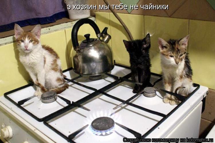 Котоматрица: э хозяин мы тебе не чайники