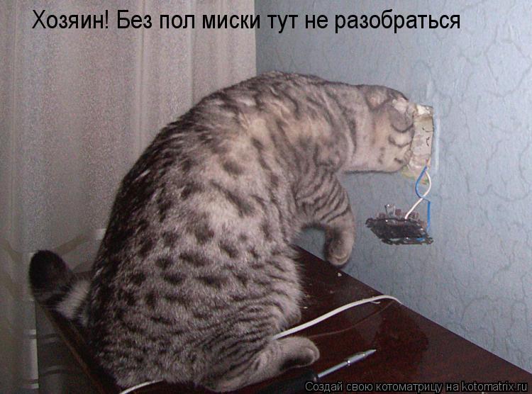 Котоматрица: Хозяин! Без пол миски тут не разобраться