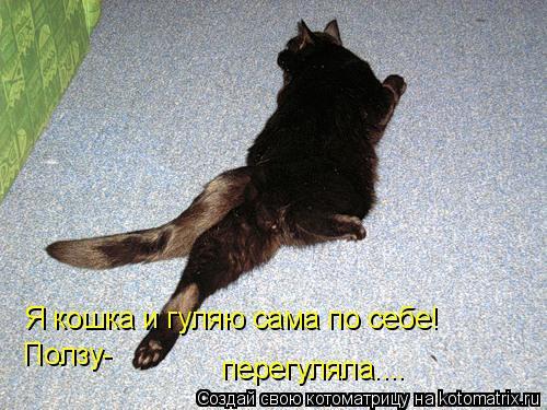 Котоматрица: Я кошка и гуляю сама по себе! Ползу- перегуляла....