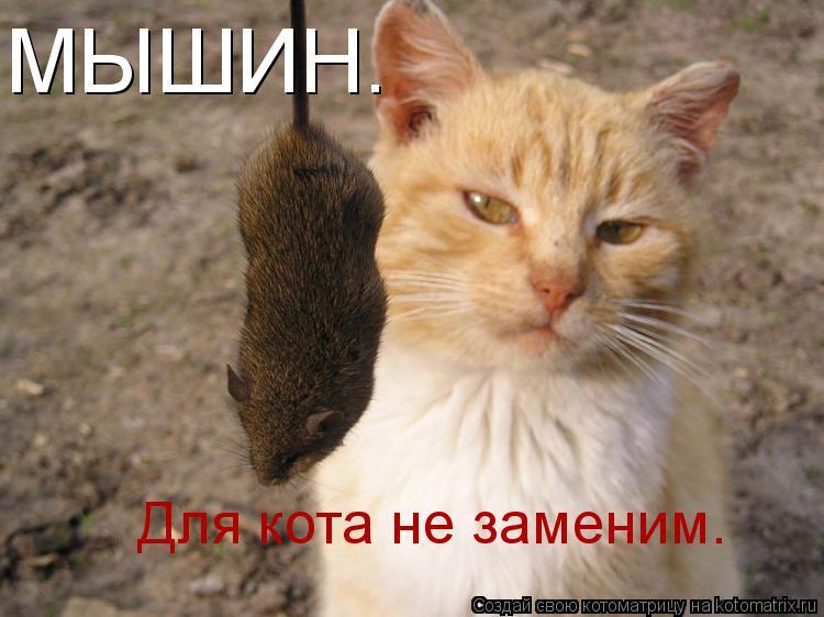 Котоматрица: МЫШИН. Для кота не заменим.