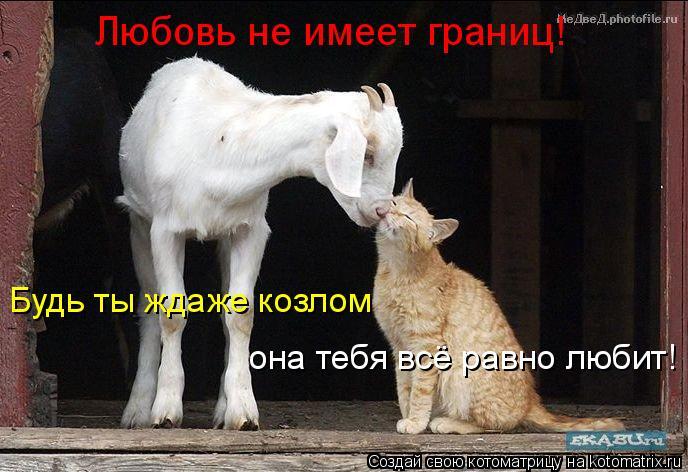 Котоматрица: Будь ты ждаже козлом она тебя всё равно любит! Любовь не имеет границ!