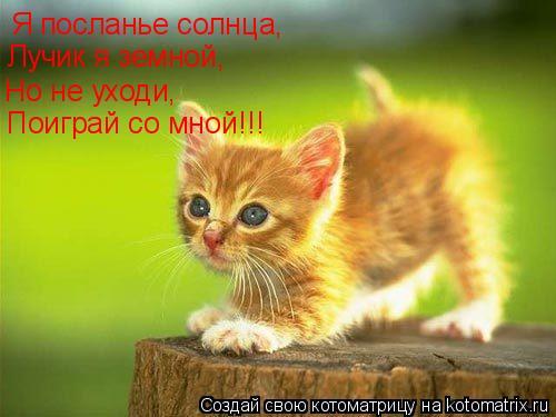 Котоматрица: Я посланье солнца, Лучик я земной, Но не уходи, Поиграй со мной!!!