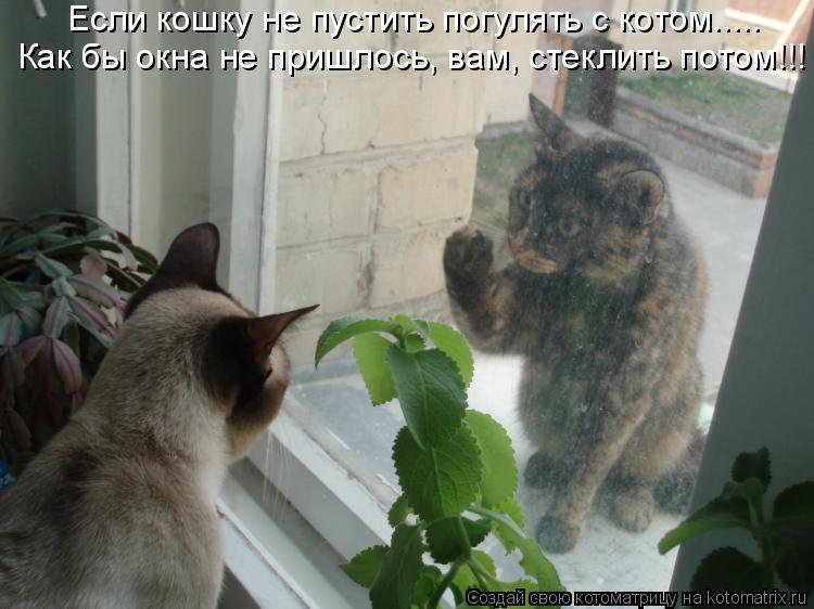 Котоматрица: Если кошку не пустить погулять с котом..... Как бы окна не пришлось, вам, стеклить потом!!!
