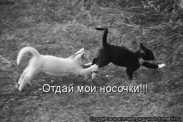 Котоматрица: -Отдай мои носочки!!!