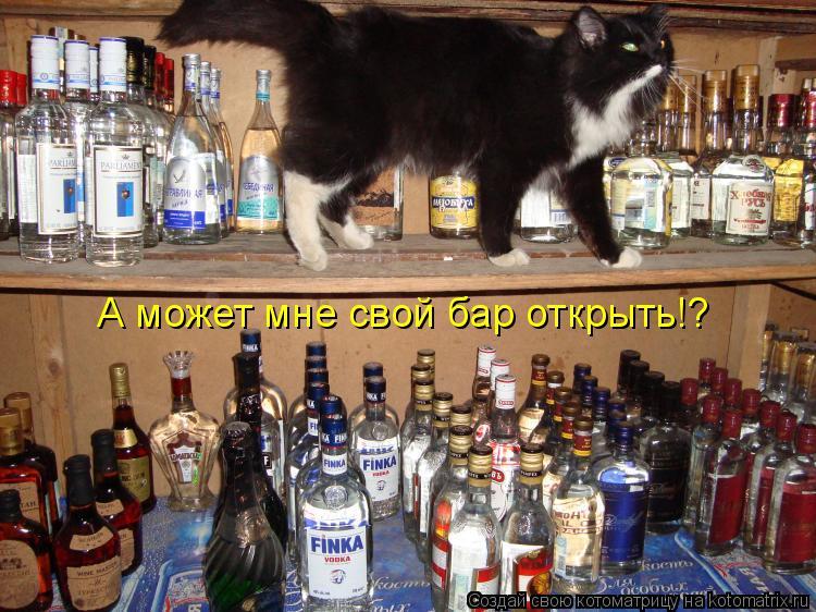 Котоматрица: А может мне свой бар открыть!?