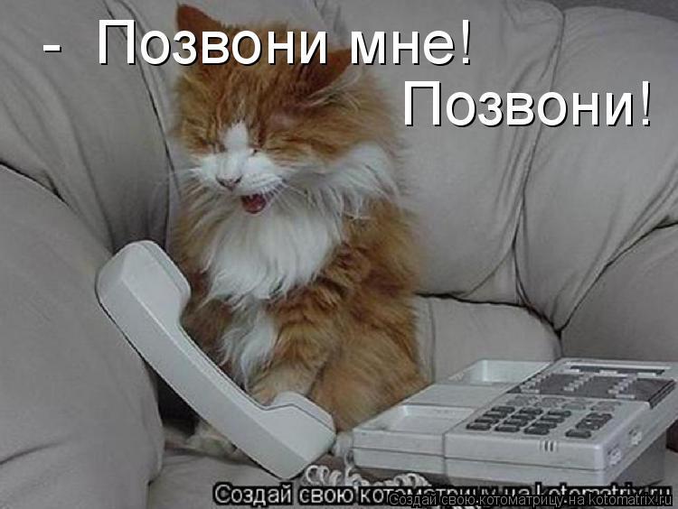 Котоматрица: -  Позвони мне! Позвони!