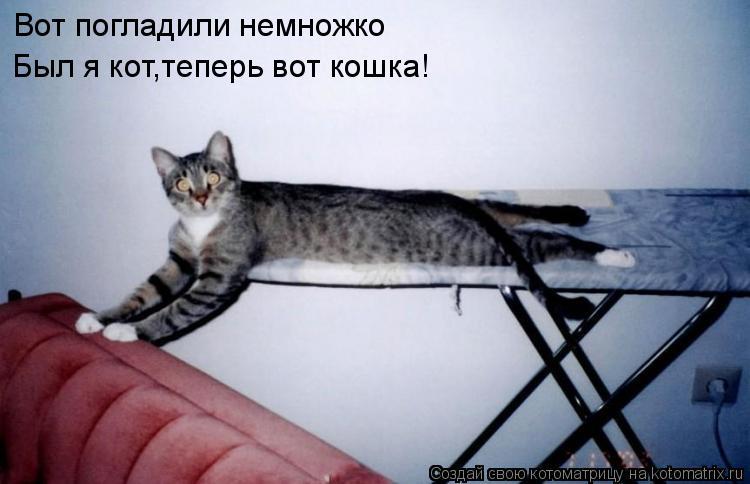 Котоматрица: Вот погладили немножко Был я кот,теперь вот кошка!