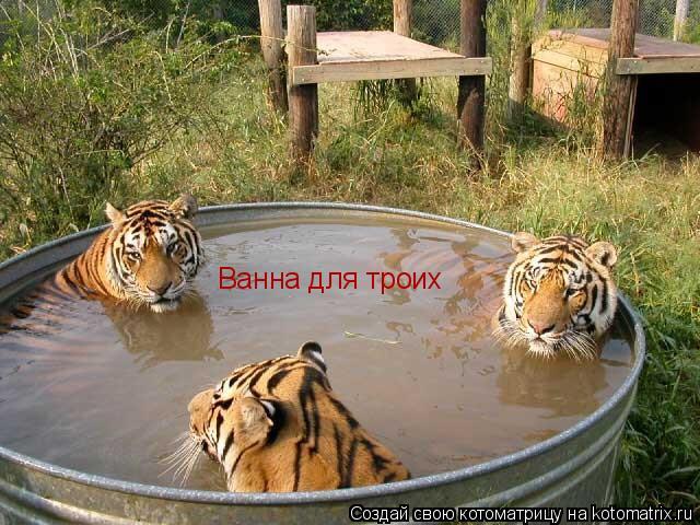 Котоматрица: Ванна для троих