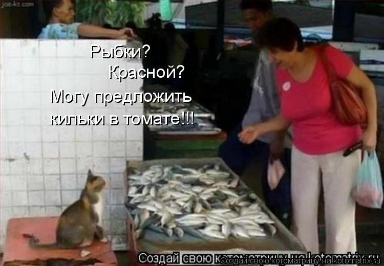 Котоматрица: Рыбки? Красной? Могу предложить кильки в томате!!!