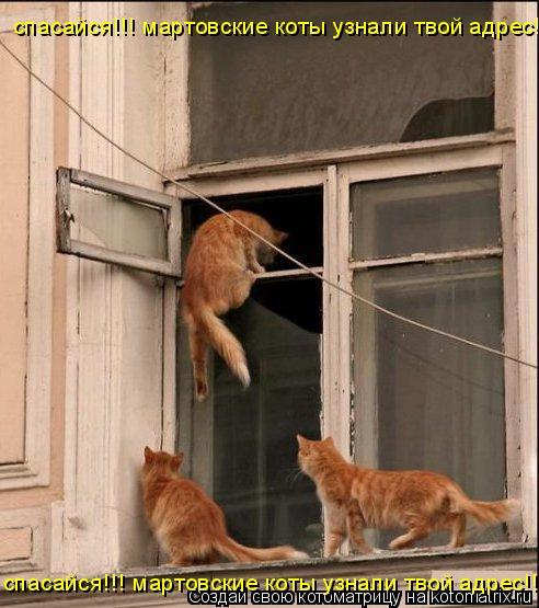 Котоматрица: спасайся!!! мартовские коты узнали твой адрес!!!! спасайся!!! мартовские коты узнали твой адрес!!!!