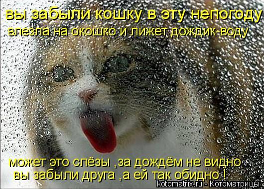 Котоматрица: вы забыли кошку в эту непогоду влезла на окошко и лижет дождик-воду может это слёзы ,за дождём не видно вы забыли друга ,а ей так обидно !