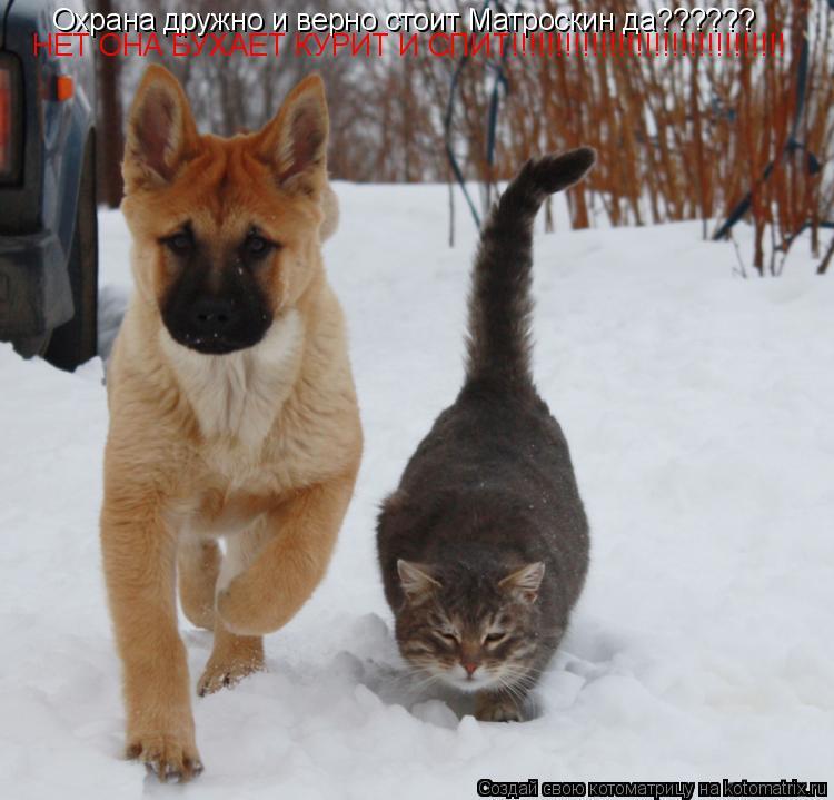 Котоматрица: Охрана дружно и верно стоит Матроскин да?????? НЕТ ОНА БУХАЕТ КУРИТ И СПИТ!!!!!!!!!!!!!!!!!!!!!!!!!!!!!!!