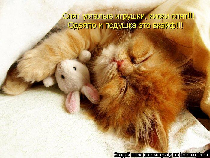 Котоматрица: Спят усталые игрушки, киски спят!!! Одеяло и подушка это вкайф!!!