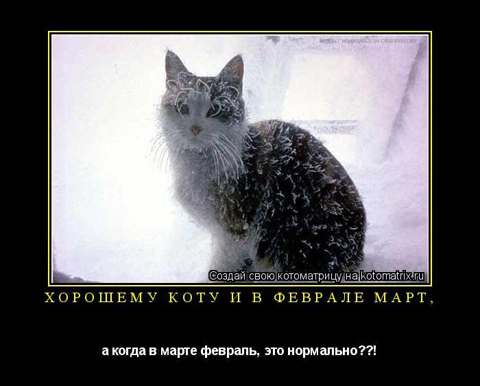 Котоматрица: Хорошему коту и в феврале март, а когда в марте февраль, это нормально??!