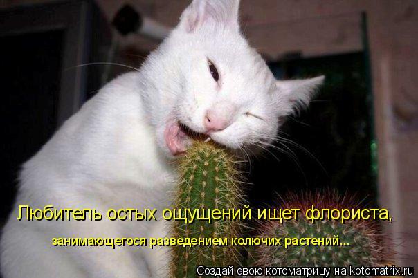 Котоматрица: Любитель остых ощущений ищет флориста,  занимающегося разведением колючих растений...