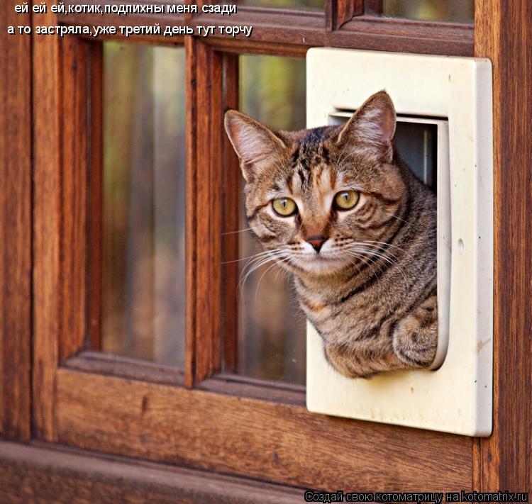 Котоматрица: ей ей ей,котик,подпихны меня сзади а то застряла,уже третий день тут торчу