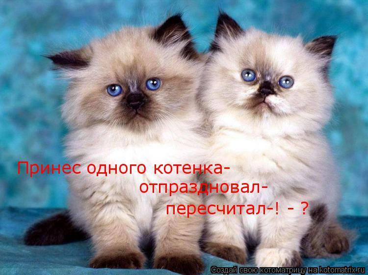 Котоматрица: Принес одного котенка- отпраздновал- пересчитал-! - ?